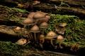 Picture Grass, Mushrooms, Log