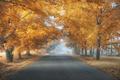 Picture road, autumn, trees, fog