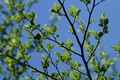 Picture the sky, spring, leaves