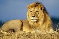 Picture nature, Leo, animals