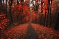 Picture red, treatment, leaves, fall, leaves, path, trees, Nature, falling leaves, autumn, forest, forest, red, trees, ...