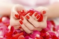 Picture red nail Polish, hands, petals, gently, manicure