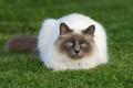 Picture cute, Cat, beautiful, grey