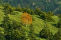 Picture grass, trees, autumn, slope, mountains