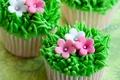 Picture flowers, cakes, cream, dessert, grass, sweet, cupcakes
