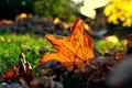 Picture macro, sheet, autumn