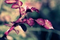 Picture macro, sprig, rose, Leaves Rose, Xpand