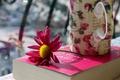 Picture mug, petals, Cup, pink, flower, book