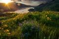 Picture flowers, morning, light, landscape