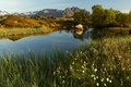 Picture mountains, lake, the reeds, stones, Norway, Sunny, the bushes, Lofoten