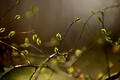 Picture widescreen, leaf, leaves, leaves, blur, Wallpaper, leaf, leaves, HD wallpapers, full screen, vegetation, background, branches, ...