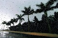 Picture drops, palm trees, rain