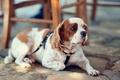 Picture dog, leash, bokeh