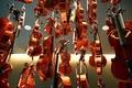 Picture Violins, violin, Shine, lacquer, background