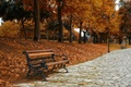 Picture bench, autumn, the city