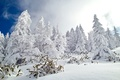 Picture winter, forest, the sky, snow, nature