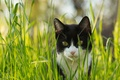 Picture cat, look, grass, black and white, cat