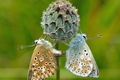 Picture moth, butterfly, flower, plant