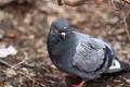 Picture animals, bird, nature