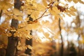 Picture macro, Park, nature, trees, leaves, yellow, autumn, forest