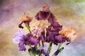 Picture background, bouquet, irises