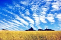 Picture field, the sky, grass, clouds, trees
