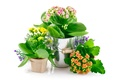 Picture flowers, flowers, bedroom, pots, room, pot flowers