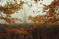 Picture fog, autumn, branches, tree, leaves