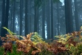Picture trees, forest, fern, landscape, nature