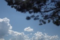 Picture spruce, greens, summer, clouds, the sky, forest