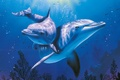 Picture sea, Dolphin, blue, aquarium, beautiful, Christian, Riese