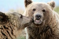 Picture Kiss, Animals, Bears