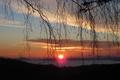Picture sunset, sun, birch