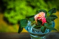 Picture leaves, rose, Bud, vase