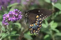 Picture flowers, lilac, butterfly