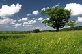 Picture tree, the sky, greens, field