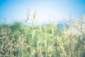 Picture stalks, bokeh, sunny, grass, seeds