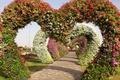 Picture garden, Miracle Garden, geranium, floral, Petunia, arch, alley, Singapore, track, design