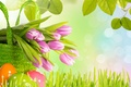 Picture flowers, eggs, tulips, leaves, Easter, Easter, grass, spring
