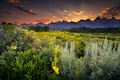 Picture greens, field, forest, clouds, trees, sunset, flowers, mountains, the evening, Wyoming, pine, USA, USA, Wyoming, ...