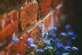 Picture flowers, nature, wall