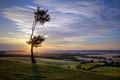 Picture tree, field, landscape, sunset