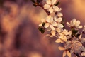 Picture macro, flowers, cherry, color, branch, spring, flowering
