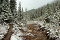 Picture forest, snow, trees, track, late autumn