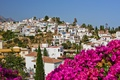Picture flowers, palm trees, flowers, palms, Spain, city, the city, sky, houses, Spain, nature, home, Nerja, ...