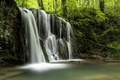 Picture forest, trees, squirt, stream, thickets, waterfall, river