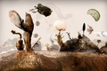 Picture landscape, fish, meat, insects, seeds, microscopy