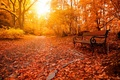 Picture relax, forest, trees, nature, park, beautiful, glow, autumn, leaves, rays, bench, lovely, nice, alley, path, ...