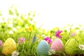 Picture grass, flowers, eggs, spring, Easter, grass, flowers, spring, painted, eggs, easter, daisy, camomile