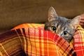 Picture look, wool, cat, plaid, blanket